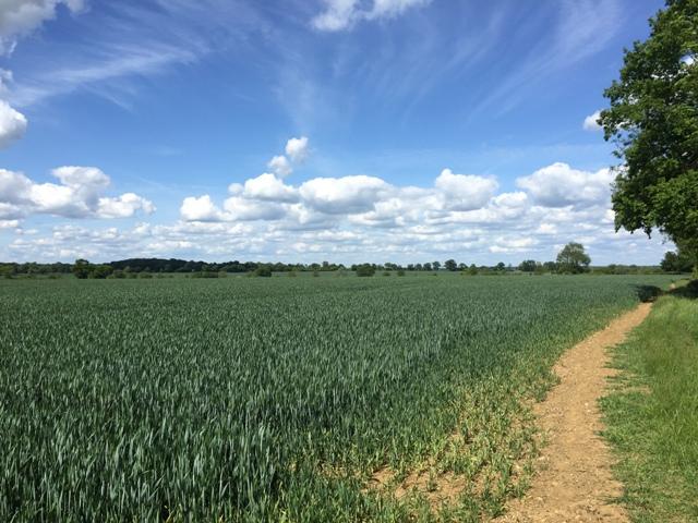 r-c-boreham-contract-farming-view-2