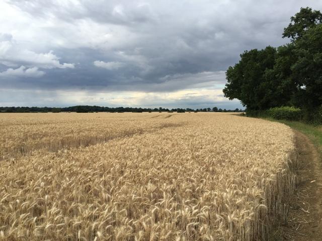 r-c-boreham-contract-farming-view-3