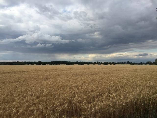 r-c-boreham-contract-farming-view-5