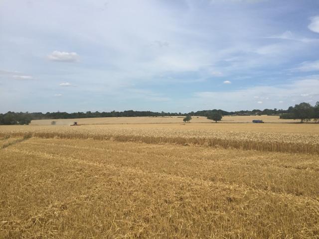 r-c-boreham-contract-farming-view-7